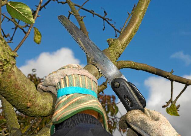 4 saker du INTE ska göra med fruktträden i höst!