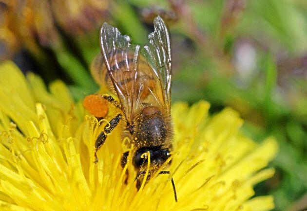 Neonikotinoiderna klotianidin, imidakloprid och tiametoxam är förbjudna för användning utanför växthus då de är skadliga för bin.