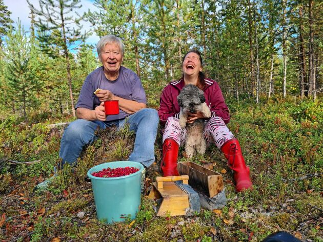 Mor och dotter tar en fikapaus i skogen med välfylld lingonhink. Råvarorna till lingon- och blåbärssylt ska plockas