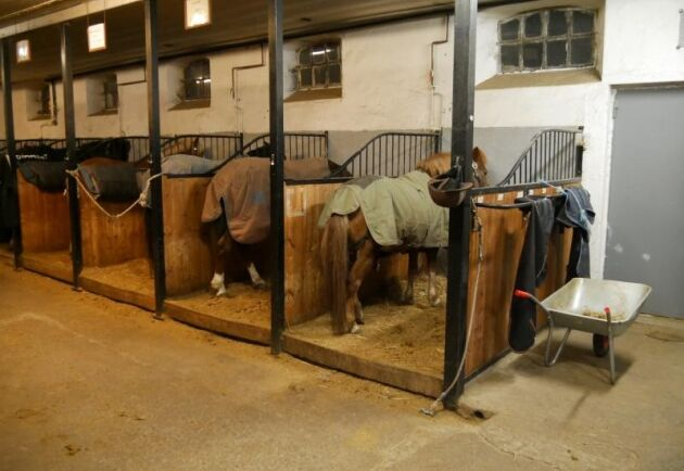 Regeringen konstaterar att ett stopp för spiltor kan tvinga ridskolor eller andra hästföretag att lägga ner sin verksamhet och vill därför utreda konsekvenserna innan en lagändring. Obs! Ridskolan på bilden har inget med texten att göra.