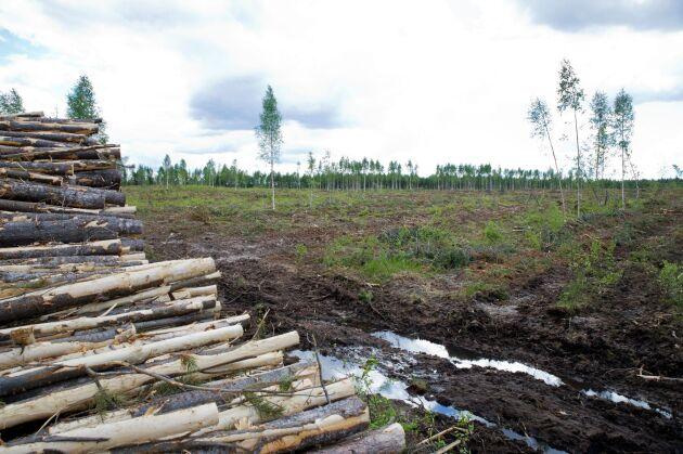 Skogsstyrelsen har gjort en åtalsanmälan om olovlig avverkning. Bilden är en genrebild.