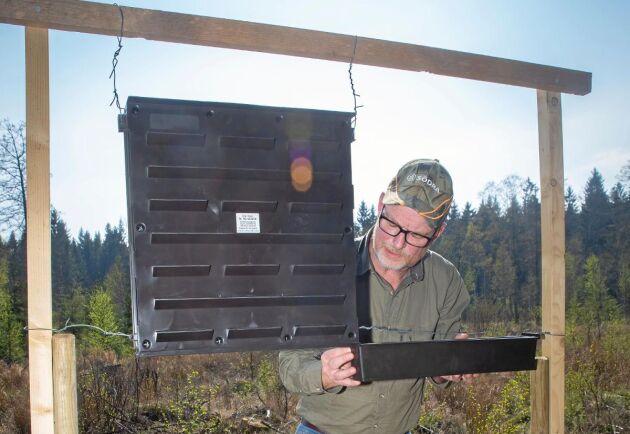 Jakob Olsson, förtroendevald inom Södra skogsägarna, vittjar tre feromonfällor för granbarkborrar.