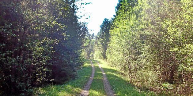 205 hektar statlig skog säljs för 23 miljoner