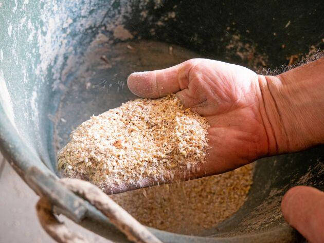 Egenproducerat kraftfoder kan löna sig.