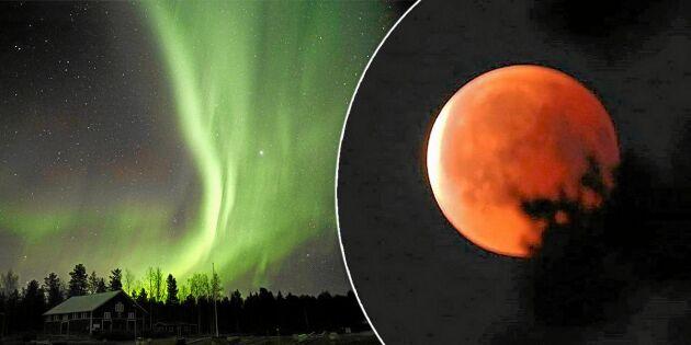 Blodmåne & stjärnfall – himlafenomenen att se fram emot