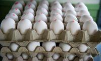 Svensk äggmarknad spås ett turbulent år