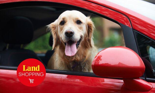 Hundar får inte lida när de åker bil och de ska sitta i bur eller ha hundsäkerhetsbälte.