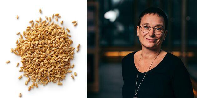 Klimatsmart matvete i stället för ris på skolmenyn