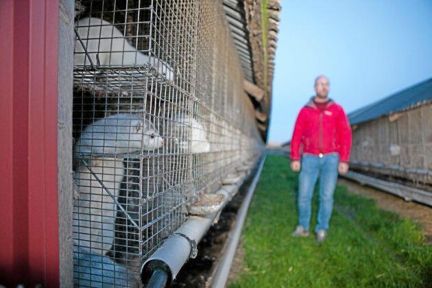 Trots hotbilden har verksamheten på Niclas Petterssons minkgård fortsatt. Han vill inte ge efter för aktivisternas metoder.