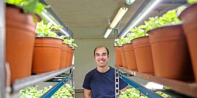 LED kastar nytt ljus över odlingen