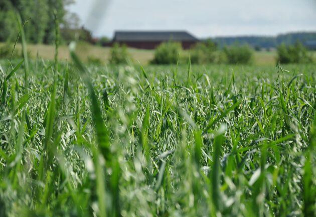 Litet utbud och stor efterfrågan har trissat upp priserna. Mest har det sålts mindre fastigheter på mellan 5-30 hektar första halvåret 2020.