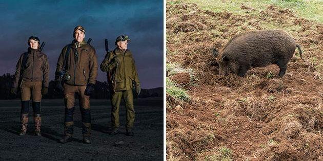 Nytt jägar-grepp ska minska vildsvinsskador