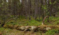 Skogsstyrelsen överklagar om nyckelbiotoper