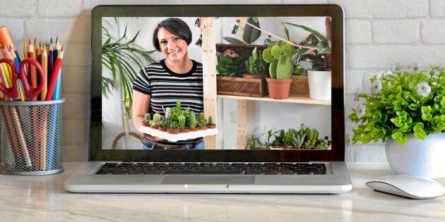 Trend: Hitta sällsynta krukväxter på nätet