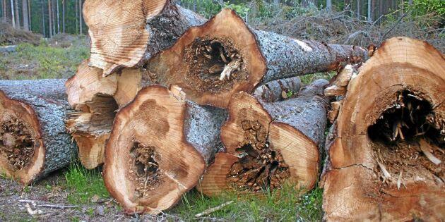 Förädling kan halvera rotrötan – kostar en miljard varje år