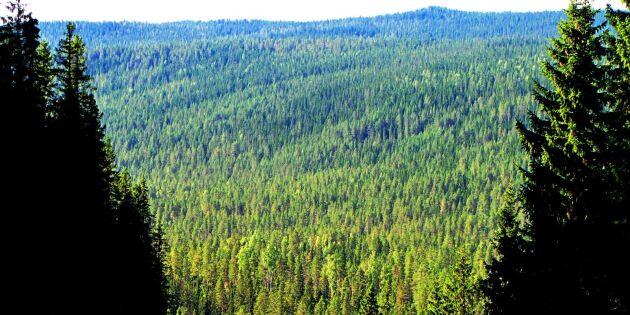 Skogspriser i söder slår rekord