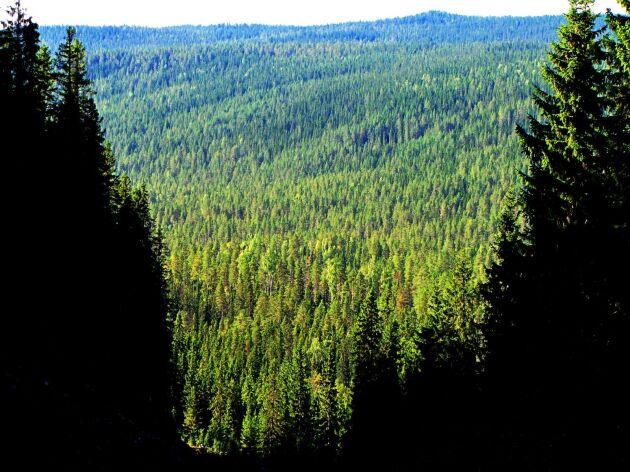 Priset på skogsmark går upp, om än lite.