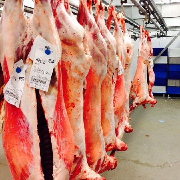 Lammen till Årets kock-finalen på hängning hos Fällmans kött.