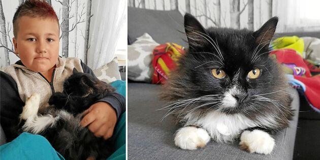 Katten Edward var försvunnen – familjen begravde fel katt