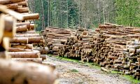 Forskare varnar för skogsskövling
