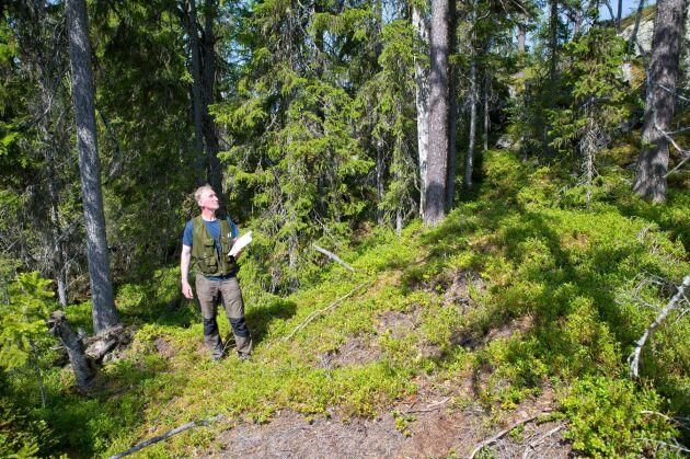 Fältarbetet är den mest tidskrävande delen av att göra en skogsbruksplan.