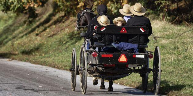 Amishfolk i USA väljer svenskt till avel