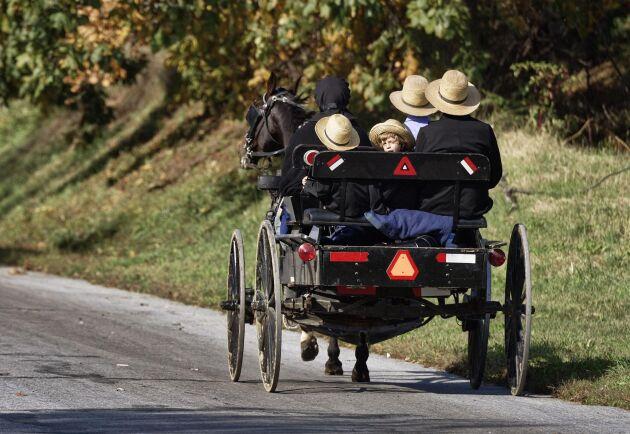 Svenska kallblodet Lejsa Kongen har sålts till USA för att användas i avel hos amishfolket. På bilden en amishfamilj i Lancaster County Pennsylvania.