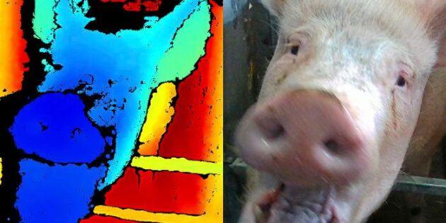 3D-teknik läser av grisars känslor