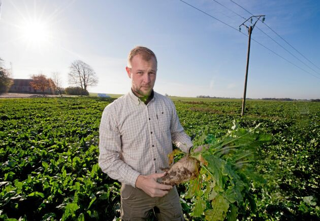 Mathias Knudsen återinförde odling av sockerbetor på Skabernäs 2018, en gröda som inte odlats här på många år.
