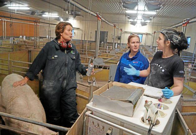 Magdalena Karlsson fick följa grisrådgivaren Jessica Sandberg Hansson under en dag på Persgård vid Varberg. I bild syns också Annika Bengtsson.