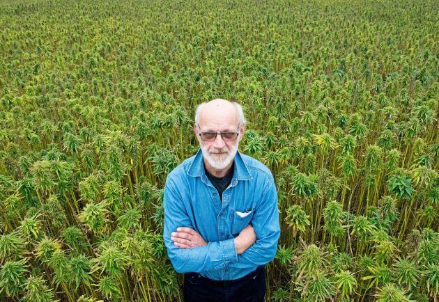 Göran Andersson odlar i år tio hektar hampa av den lågväxande sorten Finola. Bilden är från 2017 års skörd.