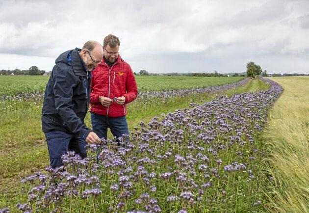 Växtodlingsrådgivaren Mattias Hammarstedt på Hushållningssällskapet i Skåne och lantbrukaren Staffan Holm i Onslunda vid en av Staffans kantzoner.
