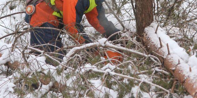 Skogsentreprenörer hårt pressade efter stormen
