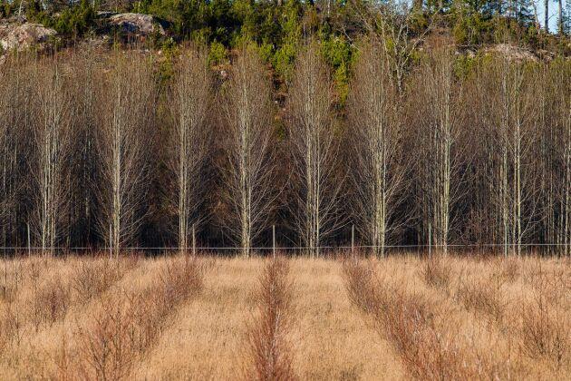 Skogen består till cirka 70 procent av tall och 21 procent av gran, resterande är lövskog.