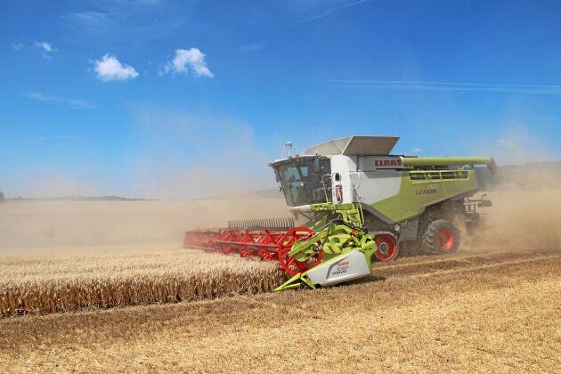 Tyska växtodlares intäkter för 2019 års gröda hotas av förra årets torrsommar.