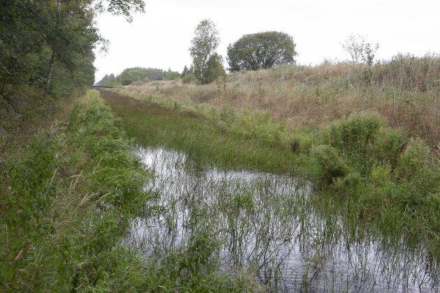 Vegetationen i kanalerna minskar vattenflödet betydligt och måste rensas med bandschaktare och grävskopor ungefär vart femte år.