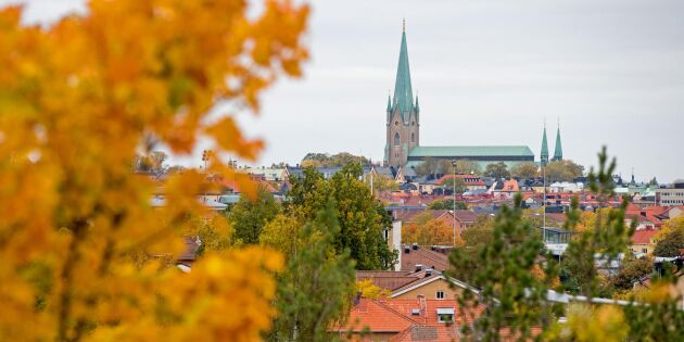 Linköpings kommun överklagar nyckelbiotopbeslut