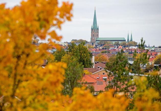 Linköpings kommun överklagar ett förbud mot att få fälla träd i centrala staden till Mark- och miljööverdomstolen.