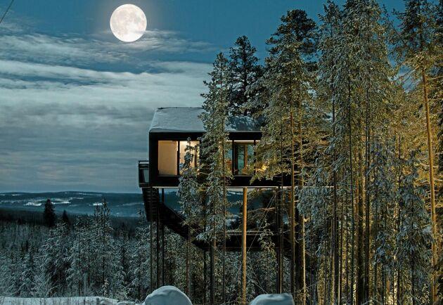 Treehotel-ägaren: Vi har Sveriges mest produktiva skogshektar | Land  Skogsbruk