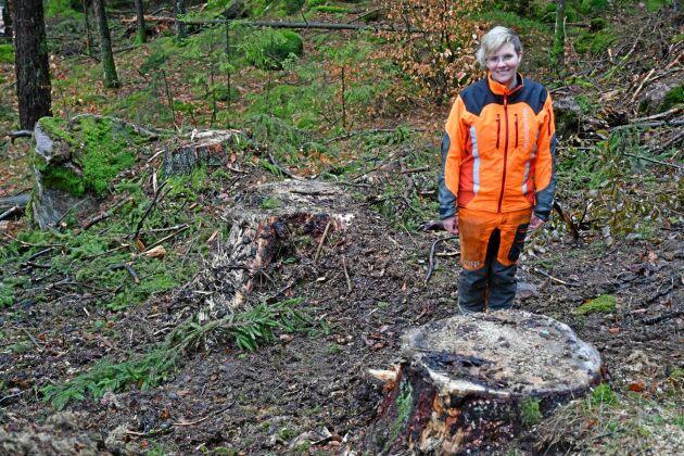 Den senaste avverkningen som Anna Skogar lät göra bestod till stor del av mycket grova träd. Därför sålde hon till en köpare som är specialiserad på långt virke och vill ha grova stockar.