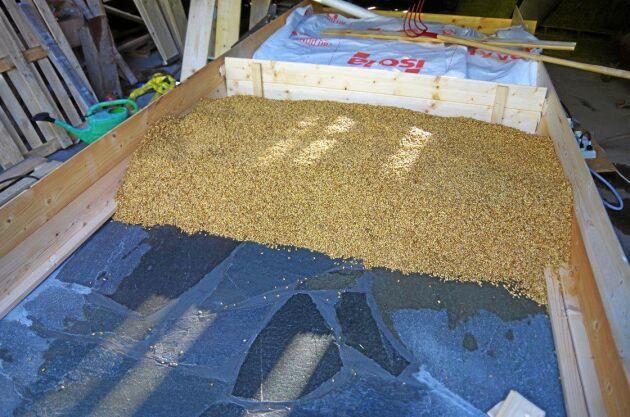 Kornet läggs för att gro på skiffergolvet, groningskistan. Där vänds och luftas kornet för hand, flera gånger per dag, under 3-4 dygn. Värmekablar under skiffern håller vårkylan borta.