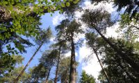 Ändrade regler för skogstaxering föreslås