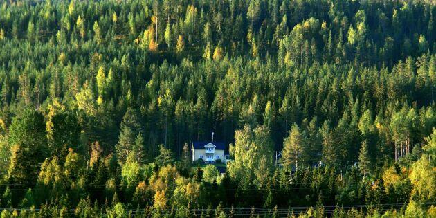 Skogsmarkspriserna ökar i Norrland