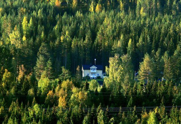 Bakom den starka marknaden för skogsfastigheter ligger en lika stark virkesmarknad, menar Skogssällskapet.