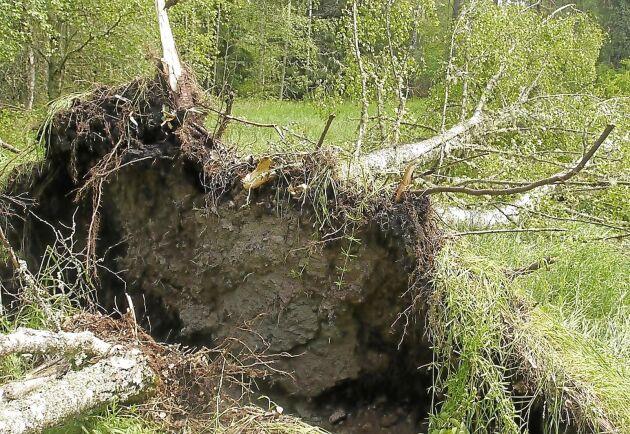 I vissa områden föll stora mängder träd som en följd av ovädret i måndags kväll.
