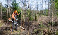 Miljoner till ökad miljökompetens i skogen