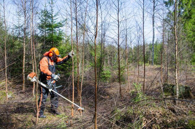 Skogsstyrelsen har upp emot 24 miljoner kronor att dela ut till utbildning inom miljökompetens i skogen.