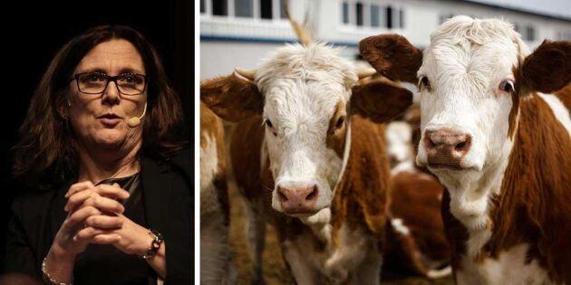 EU och Mercosur nära ett handelsavtal om nötkött