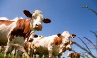 Antibiotikaanvändningen ökar i Europa