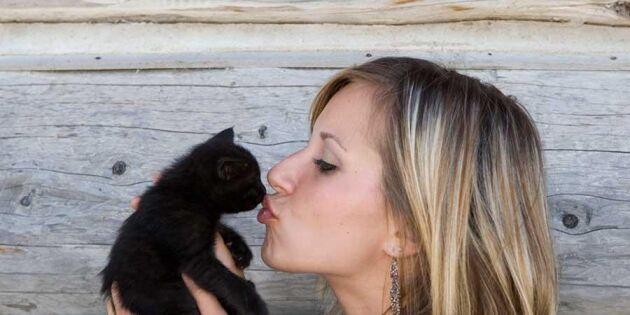 Längtar du efter en kattunge? Kolla om du klarar kattkörkortet